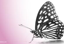 20 Citations_Transformation Digitale_Blog FutursTalents_Jean-Baptiste Audrerie_2016
