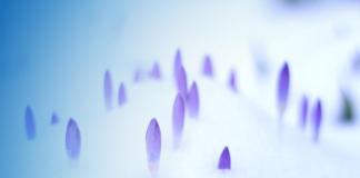 Bâtir la résilience organisationnelle Blog FutursTalents Jean-Baptiste Audrerie Mars 2020